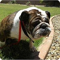 Adopt A Pet :: Adele - Gilbert, AZ