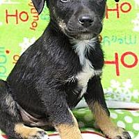 Adopt A Pet :: Steele - Wytheville, VA