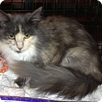 Adopt A Pet :: Callie - Troy, OH