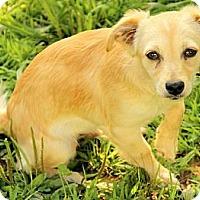 Adopt A Pet :: Abbott - Staunton, VA