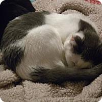 Adopt A Pet :: Abby - Loveland, CO