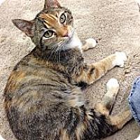 Adopt A Pet :: Hope - Aiken, SC