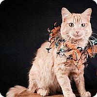 Adopt A Pet :: Moses - Bonita Springs, FL
