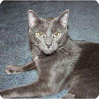 Adopt A Pet :: Axl - Little Falls, NJ