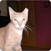 Adopt A Pet :: Jason - Lombard, IL