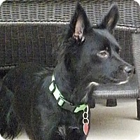 Adopt A Pet :: KONA - Torrance, CA
