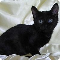 Adopt A Pet :: Inkie - Alexandria, VA