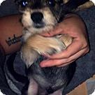 Adopt A Pet :: Elvis