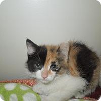 Adopt A Pet :: Beth - Medina, OH