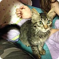 Adopt A Pet :: Fuzz - East Brunswick, NJ