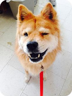 Visalia Dog Rescue
