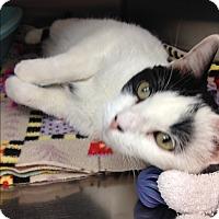 Adopt A Pet :: Karla - Newport Beach, CA