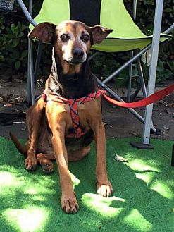 Terrier (Unknown Type, Medium) Dog for adoption in Oceanside, California - Marisol