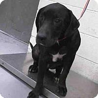 Adopt A Pet :: JAKE - Conroe, TX