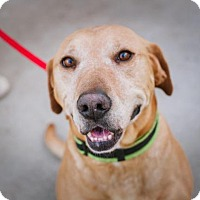 Adopt A Pet :: Cooper - REDUCED ADOPTION FEE! - Howell, MI