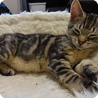 Adopt A Pet :: Katie - Colmar, PA