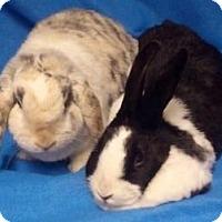 Adopt A Pet :: Gretchen - Woburn, MA
