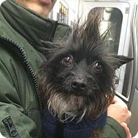 Adopt A Pet :: Jack Osbourne - Brooklyn, NY