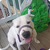 Adopt A Pet :: Remy - Midlothian, VA