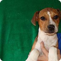Adopt A Pet :: Laney - Oviedo, FL