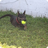 Adopt A Pet :: Grace - Pompano Beach, FL