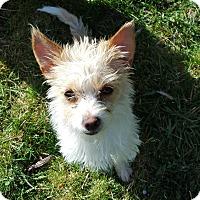 Adopt A Pet :: Daphne - Bend, OR