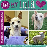 Adopt A Pet :: Lola - New Port Richey, FL