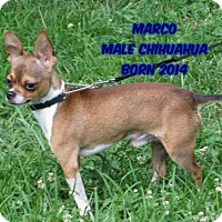 Adopt A Pet :: Marco - Huddleston, VA