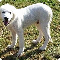 Adopt A Pet :: Dax - Kyle, TX