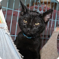 Adopt A Pet :: kittens - Priest River, ID