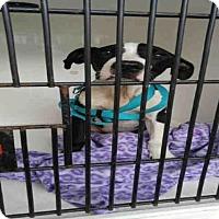 Adopt A Pet :: MONTY - Louisville, KY