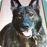 Adopt A Pet :: BRISTOL VON BONN - Los Angeles, CA