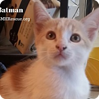 Adopt A Pet :: Batman - Temecula, CA