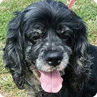 Adopt A Pet :: Jada - Lexington, KY