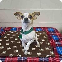 Adopt A Pet :: DOTS - Springfield, MA