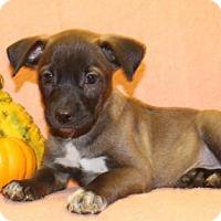 Adopt A Pet :: Devil - Modesto, CA