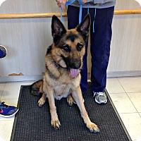 Adopt A Pet :: 1-10 Max - Triadelphia, WV
