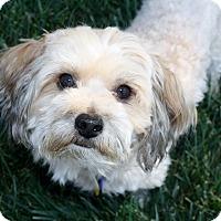 Adopt A Pet :: Pico - Yorba Linda, CA