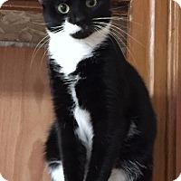 Adopt A Pet :: Desdemona - Greensburg, PA