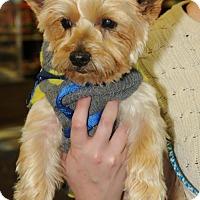 Adopt A Pet :: Monte - N. Babylon, NY