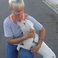 Adopt A Pet :: Sweet Pea - San Diego/Imperial Beach, CA