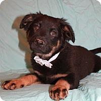 Adopt A Pet :: Cato - Trenton, NJ