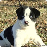 Adopt A Pet :: SKY/ADOPTED - Waterbury, CT