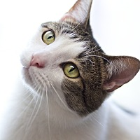 Adopt A Pet :: Jerzey - LaGrange, KY