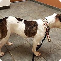 Adopt A Pet :: Jane - Aurora, IL