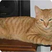 Adopt A Pet :: REEANN (KL) - Little Falls, NJ