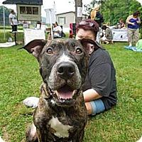 Adopt A Pet :: Foxy Roxy - Bloomsburg, PA