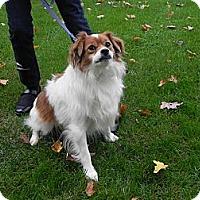 Adopt A Pet :: Barney - 84, PA