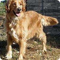 Adopt A Pet :: Tonka Joe - Denver, CO