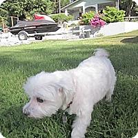 Adopt A Pet :: JoJo - Gig Harbor, WA